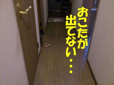20121115_1